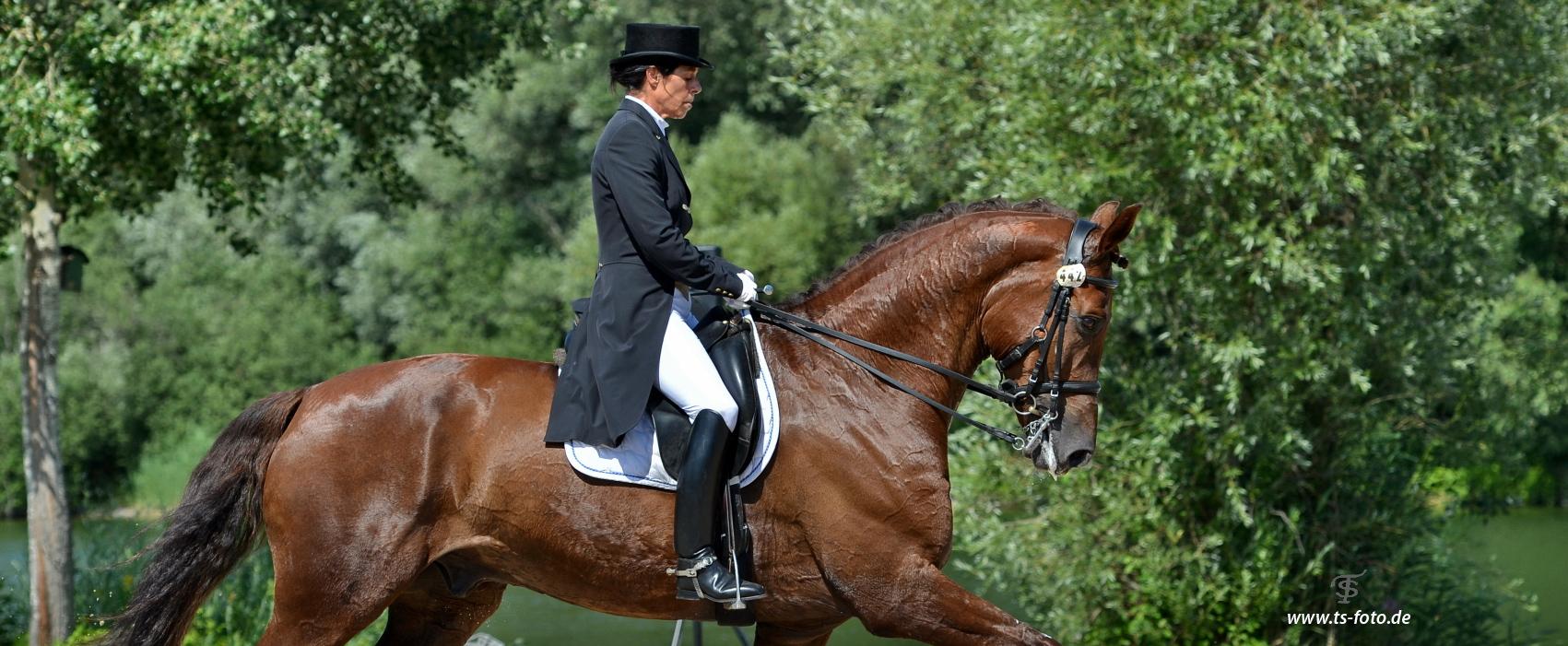 Profil – Danica Langenstein – Dressurausbildung – Pferd und Reiter – Alling bei München