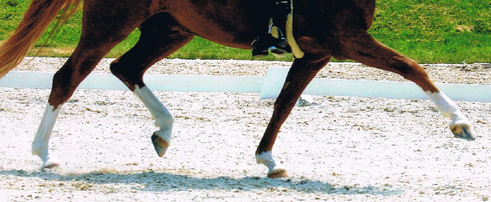 Lehrgänge – Danica Langenstein – Dressurausbildung – Pferd und Reiter – Alling bei München